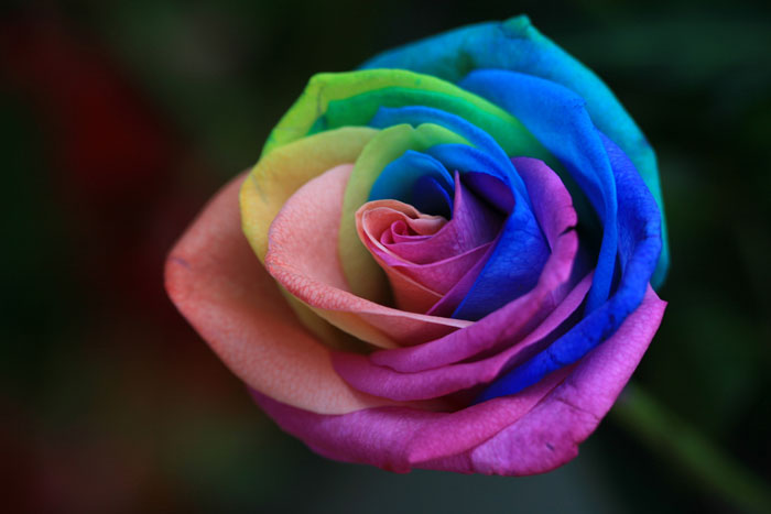 Roses are red - but they don't need to be, if you know how to use food dyes and Fibonacci