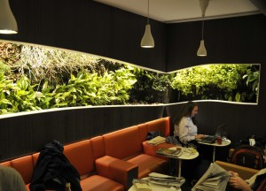 An indoor living wall in an airport lounge