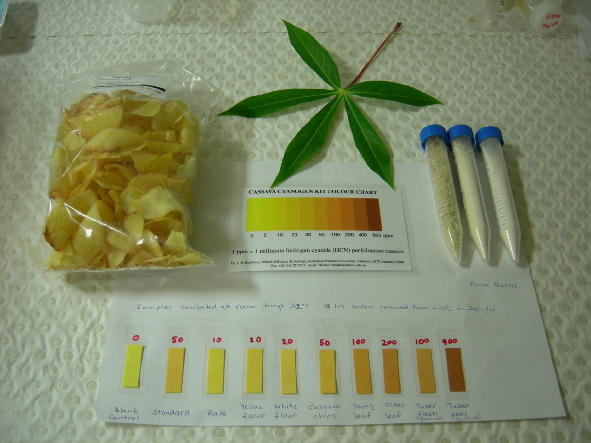 Understanding the Toxicity of Cassava