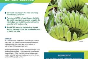 Briefing: banana disease