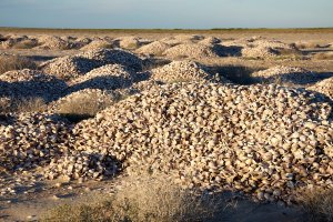 Clam shell midden