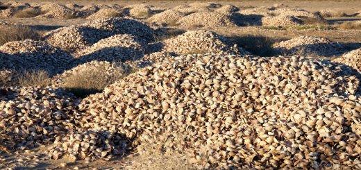 Clam shell midden