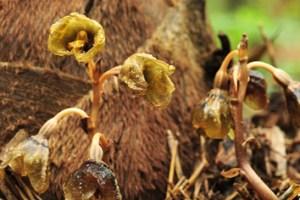 Saprotrophic fungi and fully mycoheterotrophic orchids
