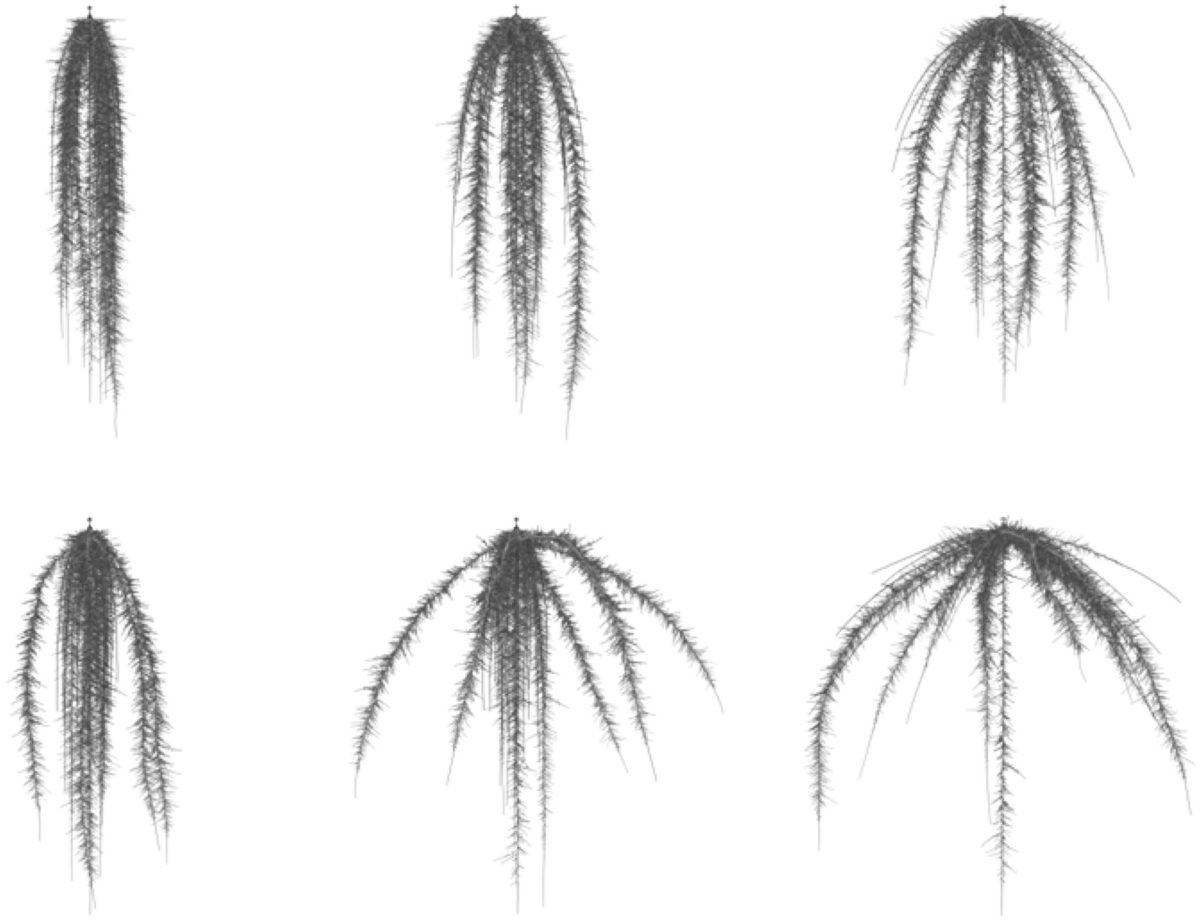 Maize root growth angles, nitrogen capture and environmental conditions