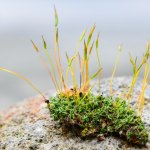 Moss, bringer of stability, and life…