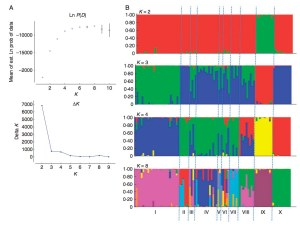 Results obtained from STRUCTURE for the analysis of the full wild sample (94 individuals)