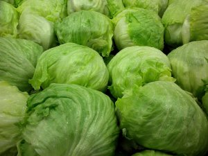 Iceberg lettuces
