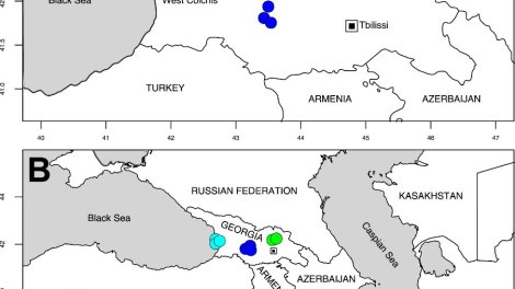 Map of Georgia (A) pointing out the sampling sites for Alnus glutinosa subsp. barbata in Western (Cyan), Central (Blue) and Eastern (Green) Georgia.
