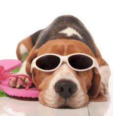 chien-vacances1