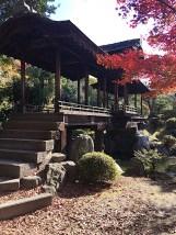 Un pò di foto sulla natura di Kyoto con le foglie rosse e i bei giardini xD