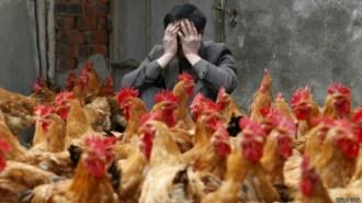 130522060147_cn_zhejiang_chicken_624x351_reuters