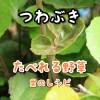 野草つわぶき・剥き方・食べ方<屋久島レシピ>