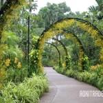 シンガポール植物園のオンシジュームアーチ