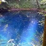 青森・「神秘の十二湖」と「世界遺産白神山地」に行ってみよう!