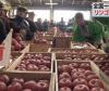 青森 弘前でリンゴの「初市」 2017(1月5日 13時28分)
