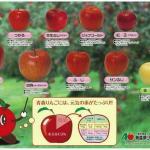 青森県の「リンゴ下敷き」知っていますか。リンゴの種類!