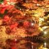 2017 弘前城菊と紅葉まつり開催!⦅10月20日~11月12日⦆