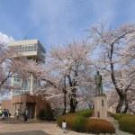 AOMORI「八戸で開花宣言」=館鼻公園(2018年4月17日)