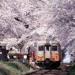 昭和30年代の観桜会を体験する「幻の観桜会」が芦野公園で開催@2019年5月3日
