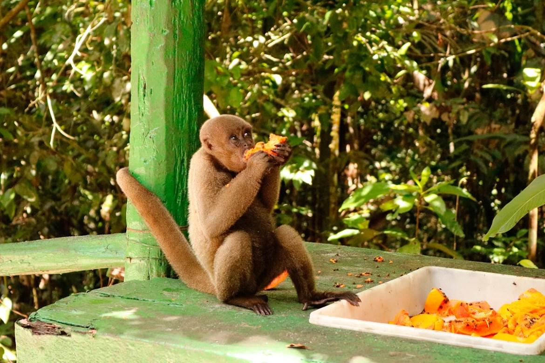 Macaco se alimentando