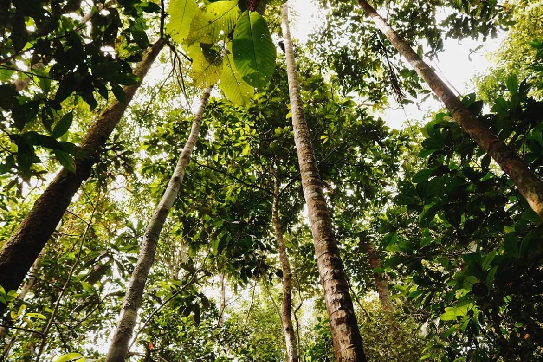 Árvores muito altas