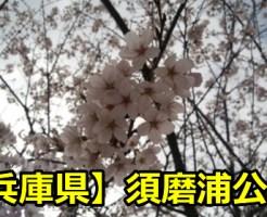 【兵庫県】須磨浦公園のお花見は夜桜のライトアップが良い?桜の見頃はいつ?