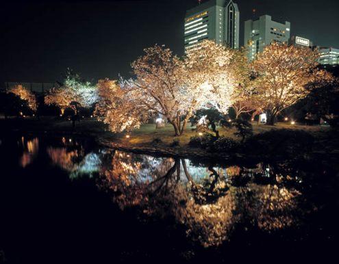 浜離宮恩賜庭園 桜 ライトアップ