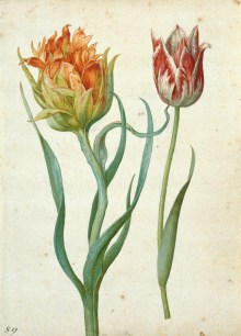 Georg Flegel (1566–1638) Zwei Tulpen, ca. 1620-1630, Aquarell und Deckfarben mit Weißhöhung auf Papier über Vorzeichnung mit schwarzem Stift, Art On Screen - News - [AOS] Magazine