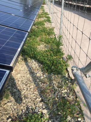 太陽光発電所の雑草対策|砕石+クローバー・・・失敗しました