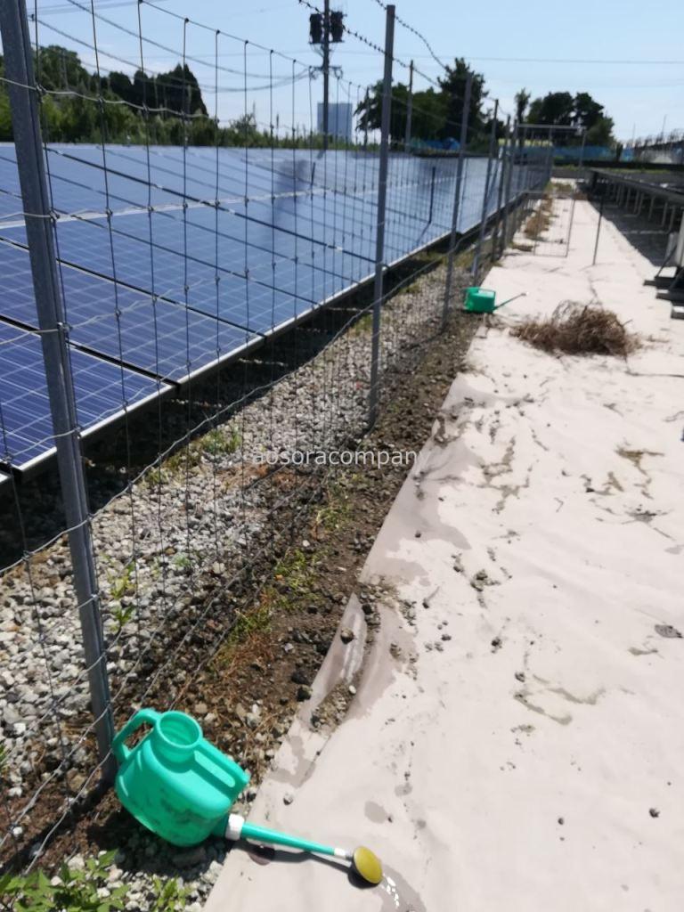太陽光発電所へクラピアチャレンジスタート。まずはフェンス下へ。