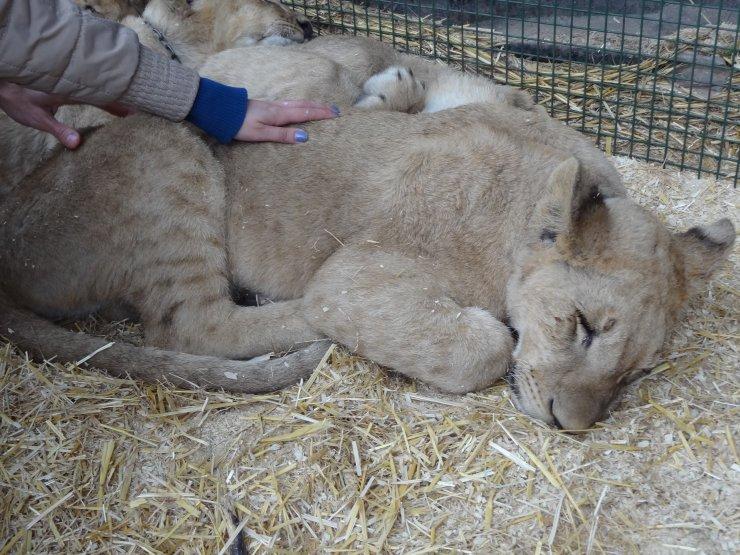 zoo_lujan-agentina-dentro-da-jaula-turismo Buenos Aires Roteiro para 1 semana