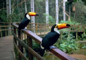 melhores-lugares-para-viajar-no-Brasil-sozinho-foz-do-iguaçu-parque-das-aves Os 10 melhores lugares do Brasil para se viajar sozinho (a)