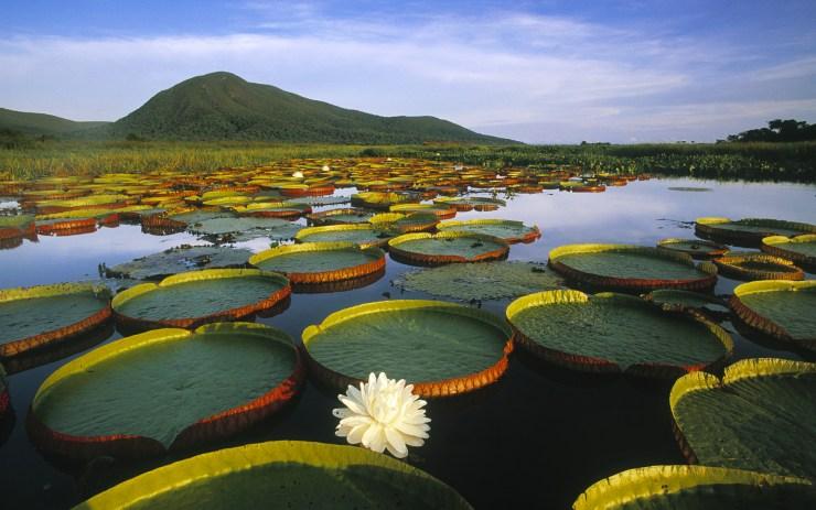 onde-ir-em-abril-pantanal
