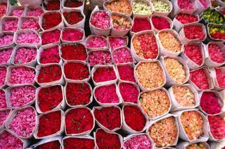 rosas do marrocos