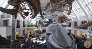 o-que-fazer-em-londres-ate-de-graca-museu-de-história-natural O que fazer em Londres até de graça (mais de 80 Dicas!)