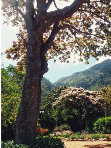 Roteiro-Cidade-do-Cabo-4-a-7-dias-Kirstenbosch-National-Garden-3 Roteiro Cidade do Cabo 4 a 7 dias (Sensacional)!