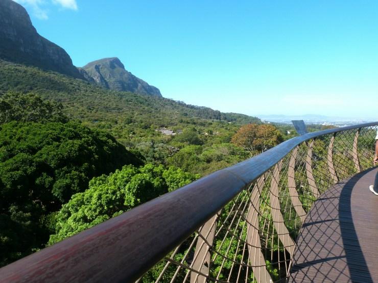 Roteiro Cidade do Cabo 4 a 7 dias tree canopy way