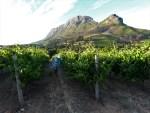 confira o roteiro Rota dos vinhos em Cape Town Stellenbosch e Franschhoek