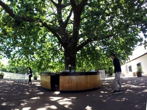 Rota-dos-vinhos-em-Cape-Town-Stellenbosch-e-Franschhoek-boschendal-3 Rota dos vinhos em Cape Town Stellenbosch e Franschhoek