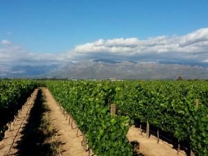 Rota dos vinhos em Cape Town Stellenbosch e Franschhoek plaisir de merle