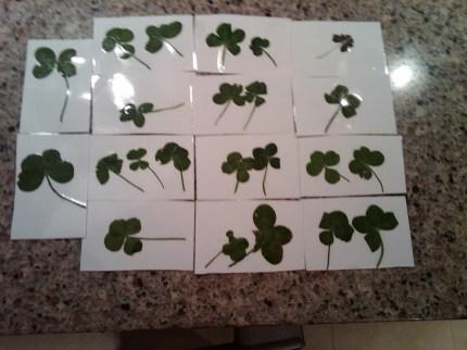 23 four leaf clovers