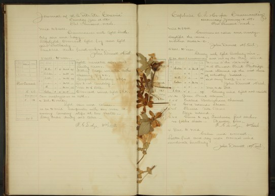USRC Corwin log entry with pressed flowers
