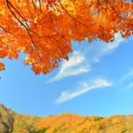 京都嵐山の嵯峨野トロッコ列車リッチ号は予約できる?値段は?