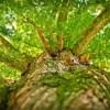 カブトムシの寿命は何月頃?長生き記録どれぐらい?ひっくり返る理由は?