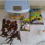 カブトムシの幼虫が蛹室を作りさなぎになる準備を始めました!