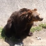 日本最大の哺乳類ヒグマ、三毛別羆事件と慟哭の谷が伝えること