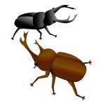 カブトムシ・クワガタムシの成虫の近況