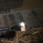 コクワガタの産卵セット割り出し