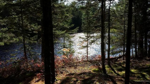 Farm land featured at Marks Lake Rd, Marshfield, ME 04654