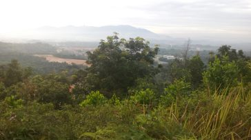 View from centipede hill